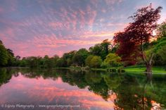 Kearsney Abbey gardens, Beautiful sunset reflections dancing on the water image available as an print mounted and unmounted