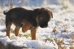 Titch the very naughty Border Terrier | Flickr - Fotosharing!