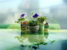 「盆栽」とは、鉢の中に自然の景観を作り出し、季節の移ろいを楽しむものです。その中でも、高さが10cm未満で、女性の手のひらに乗るくらいの小さなサイズのものを「ミニ盆栽」といいます。可愛らしく、手軽に始められることから特に若い女性に人気を集めています。