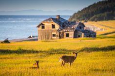 Mystérieuse île d'Anticosti Beautiful Landscapes, Animals, Outdoor Travel, Tourism, Animales, Animaux, Animal, Animais