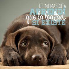 Mejores 120 Imagenes De Frases Animales En Pinterest I Love Dogs