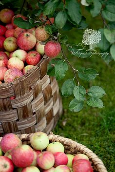 Apple Time by loretoidas on Flickr.