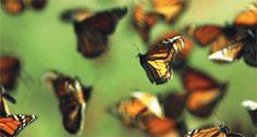 Nous disons les papillons intérieur de nous, ils font un bruit ...