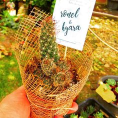 Congratulations and the warmest of wishes for the lovely couple Ronel and Hyara, who made their event extra special with succulent souvenirs. Cebu, Congratulations, Succulents, Couple, Amazing, Succulent Plants, Couples, Cebu City, Men's Fitness Tips