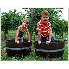 18th Annual Harvest Grape Stomp at Lakeridge Winery & Vineyards Clermont, FL #Kids #Events