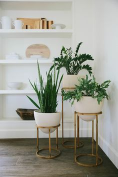 Styling Tip: Adding Greenery with Succulents #modernhomedecor
