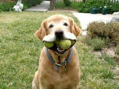 10 Dogs Who Don't Need Humans To Make Fetch Happen