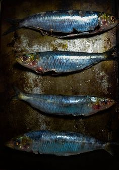 grilled sardines1 (1 of 1)