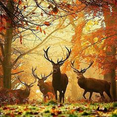 Deers in forest during autumn. | Photography by Alex Saberi #WildLifeOneArth