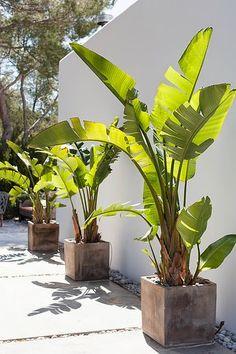 Linea R: Casa Dos Ibiza. El proceso de un cambio