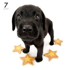 Artlist Collection THE DOG Labrador Retriever calendar