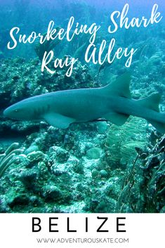 What it's like to snorkel Shark Ray Alley in Belize. Take a 1-day snorkeling trip on a sailboat departing from the island of Caye Caulker and soon find yourself surrounded by tropical fish, giant stingrays, dozens of nurse sharks and friendly sea turtles. A guide to planning your adventure + practical tips for your trip. Travel in the Caribbean. | Adventurous Kate: Solo Female Travel Blog #Belize #Caribbean