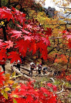 Korea is famous for having distinct 4 season! Especially, in Autumn, you can see that all mountains in Korea get changed to beautiful color of dresses and people love hiking to enjoy the beauty of autumn South Korea Seoul, North Korea, Seoraksan National Park, Autumn In Korea, Cities In Korea, Sokcho, Korean Wave, Fall Pictures, What A Wonderful World