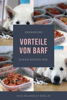 Hund || Ernährung || #Barf || Gesund