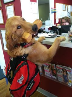 Types of Service Dogs - Anything PawsableAnything Pawsable