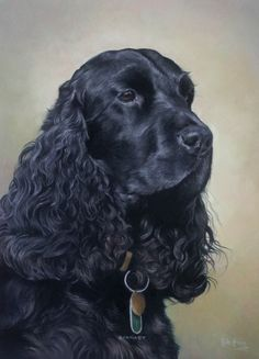Gallery of examples of commissioned head & neck portraits of horses by Yorkshire's leading equine portrait artist Mike Haken Dog Drawings, Animal Drawings, Wildlife Paintings, Animal Paintings, Custom Dog Portraits, Pet Portraits, Black Cocker Spaniel, Cockerspaniel, Dog Shampoo