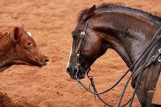 """i love when Cutting horses get all sassy with the cows """"I will CUT YOU."""" Hahaha!"""