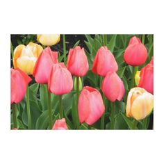 Spring Shower Tulips Wrapped Canvas Print ,as shown $163.00.