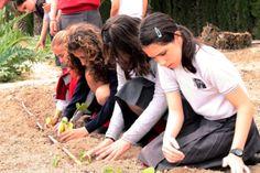 Los alumnos de la Escuela de Pusol en el huerto, y en contacto constante con la naturaleza y su entorno http://www.museopusol.com/es/actividad/?id=86&cat=10&dat=11%202014