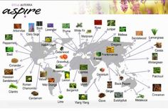 A map of where all the doTERRA essential oils come from and an explanation of co-impact sourcing.
