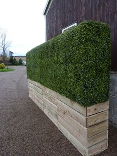 Deluxe Artificial Boxwood Panels ~ As seen in Olympic Opening Ceremony | Hedging | Artificial Plants, Artificial Trees and Silk flowers | Ev...