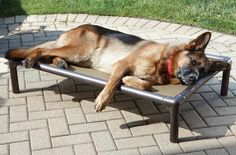 Just found this Raised Outdoor Dog Bed - Raised Cooling Bed -- Orvis UK on Orvis.com!