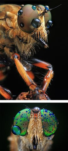 Amazing insects! Creepy but beautiful at the same time!