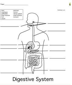 Resultado de imagen para sistema respiratorio para