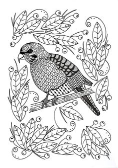 Ornamental Bird Adult Coloring Page
