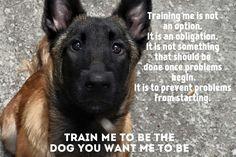 German Malinois, Belgian Malinois Dog, Belgian Shepherd, Shepherd Dog, German Shepherds, Belgium Malinois, Dog Poems, Working Dogs, Rottweiler