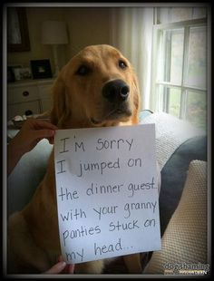 I'm sorry I jumped on the dinner guest... with your granny panties stuck on my head... 21 of the Greatest DogShaming Pics: HIDE YO' UNDERWEAR