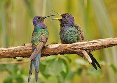 photos of birds of the world   Beautiful Birds of the World (41 pics) - Izismile.com