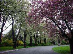 Beautiful Botanisk Hage [ Botanical Garden ] in the Tøyen , Oslo, Norway #botanicalgardens #toyen #oslo #norway