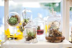 awesome vancouver florist Air plants are perfect for those with a fear of houseplants -- it's easy to grow and care for air plants!  :@deniselinphoto #airplants #shoplocal #succulent #sunflowerflorist by @vancouverflower  #vancouverflorist #vancouverflorist #vancouverwedding #vancouverweddingdosanddonts