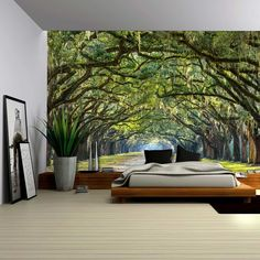 Amazon.com: Wall26® - Gazing Up Into a Leafy Covered Forest - Wall Mural, Removable Sticker, Home Decor - 66x96 inches: Home & Kitchen