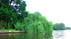 Berlin erleben auf dem Ruderboot ;-) - solltet ihr unbedingt machen