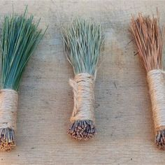 A dual-purpose hand broom can be made easily from collected pine needles, that can not only be functional, but decorative as well! Pine Needle Crafts, Pine Cone Crafts, Brooms And Brushes, Pine Needle Baskets, Maila, Mother Earth News, Pine Needles, Kitchen Witch, Nature Crafts