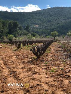 Welcome to Avina Wine Accessories - Avina Wine Tools Wine Vineyards, Wine Bottle Stoppers, Garden Design, Country Roads, Travel, Outdoor, Outdoors, Viajes, Wine Bottle Corks