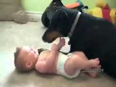 I love baby and dog videos