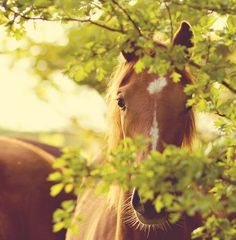 A horse a day keeps the doctor away! You all know it.