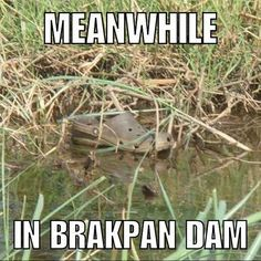 The kids are more dangerous than the crocodiles in Brakpan. Funny Pictures With Captions, Funny Captions, Picture Captions, Funny Pranks, Funny Memes, Hilarious, It's Funny, Animal Memes, Funny Animals