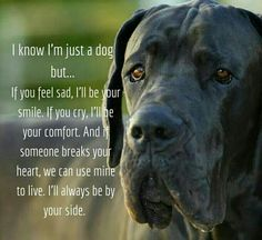 grooming supplies to hold dog clippers grooming salon ideas diy clippers pet grooming quotes e collar funny n girl art x cat art birthday party a holic i love you gif s bed Animal Quotes, Dog Quotes, Great Dane Quotes, Puppy Love Quotes, I Love Dogs, Cute Dogs, Mans Best Friend, Best Friends, Game Mode