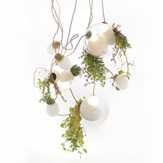 omer arbel: planter chandelier