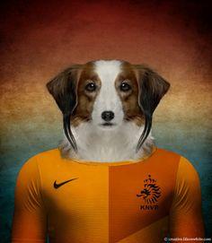 Pays-Bas : Petit chien hollandais de chasse au gibier d'eau