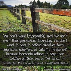 In the latest step of a two and a half year legal battle, plaintiffs in Organic Seed Growers and Trade Association (OSGATA) et al v. Monsanto asked the U.S. Supreme Court on Thrusday to hear their case challenging the patents on Monsanto's genetically engineered seed.  Read more here: http://sandiegofreepress.org/2013/09/us-farmers-continue-david-vs-goliath-battle-against-monsanto/