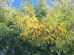 Late Summer Tree Problems