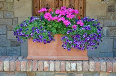 Pink and purple petunias planter by Perl Photography, via Flickr