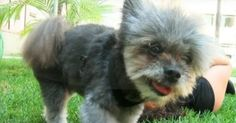 It's hard to be a senior dog at the animal shelter, seeing all the younger animals come and go. The chances for an older dog to get adopted are not as good as those of a puppy… and the chances for a disabled senior dog to get adopted are slim to none. However, miracles truly... View Article