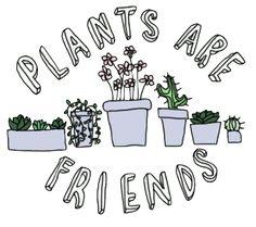 plants are friends - חיפוש ב-Google