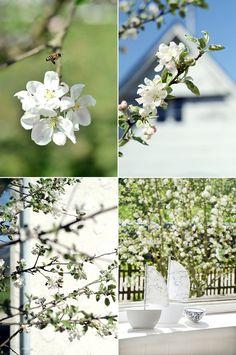 s i n n e n r a u s c h: Von Apfelbäumen und Baustellendreck